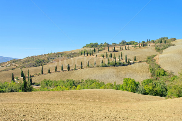 cypress curve in fall 13 Stock photo © LianeM