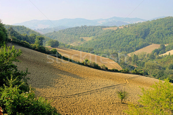 Umbria field in fall 01 Stock photo © LianeM