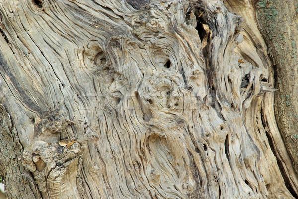 olive tree trunk 03 Stock photo © LianeM