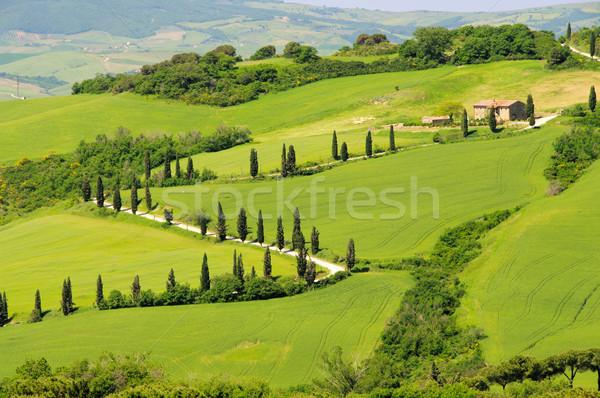 cypress curve 06 Stock photo © LianeM