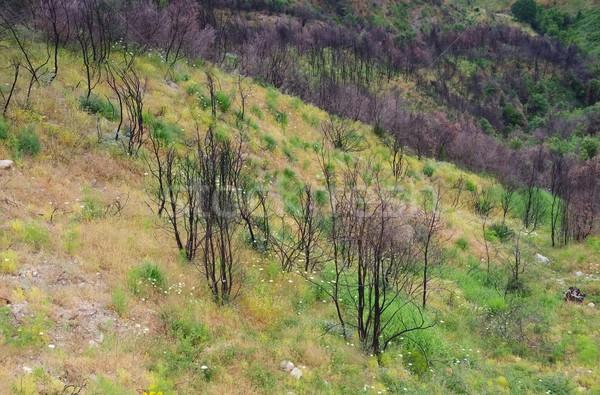 Incendios forestales madera montana colina secar Foto stock © LianeM