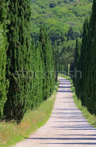 cypress avenue  Stock photo © LianeM