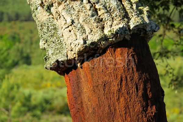 cork oak 27 Stock photo © LianeM