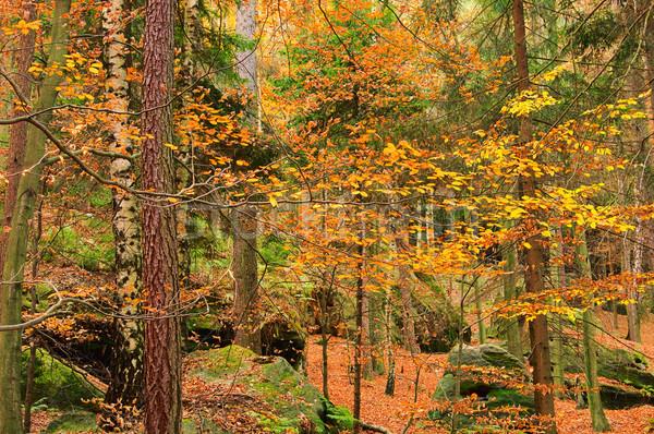 Homokkő kő erdő tájkép levél levelek Stock fotó © LianeM