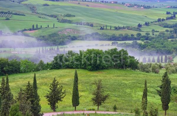 Toskania cyprys drzew utwór drzewo wiosną Zdjęcia stock © LianeM