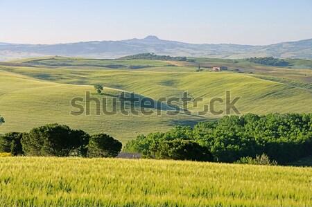 Casa árvore primavera campo verde castelo Foto stock © LianeM