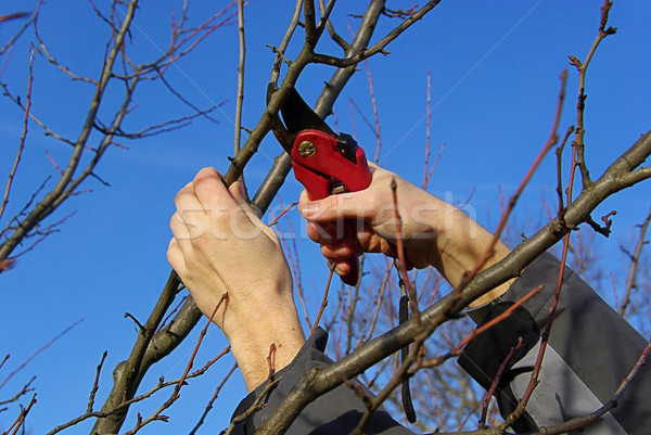 Ağaç 20 el ahşap meyve Stok fotoğraf © LianeM