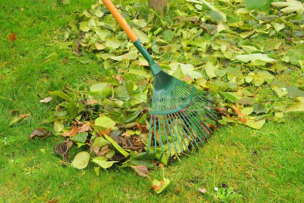 листьев грабли 10 дома трава работу Сток-фото © LianeM