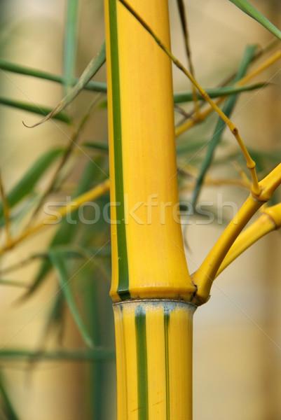 Foto stock: Bambú · 26 · hoja · marco · verde · planta