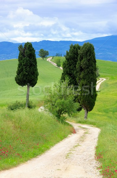 Tuscany cypress trees with track 04 Stock photo © LianeM