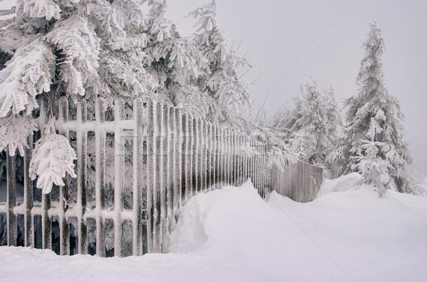 fence in winter 01 Stock photo © LianeM