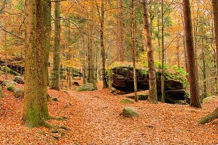 beech forest in fall 05 Stock photo © LianeM