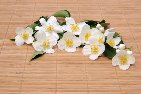 16 цветы фон белый шаблон духи Сток-фото © LianeM