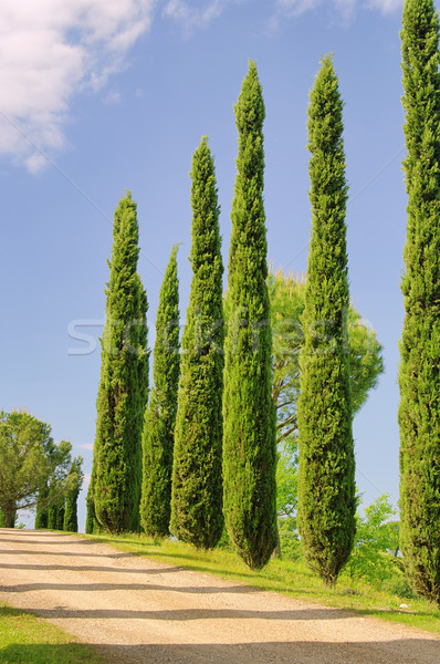 Toscane arbre route arbres bleu Photo stock © LianeM