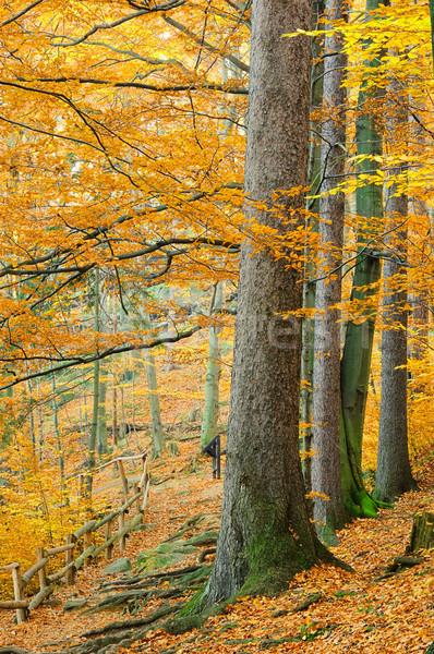 hiking trail 07 Stock photo © LianeM