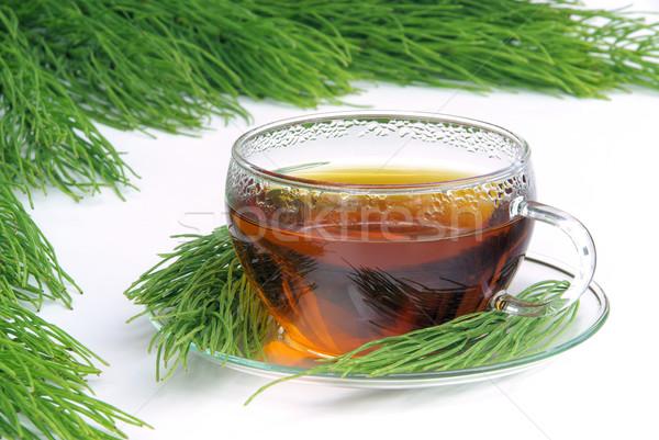 tea field horsetail 07 Stock photo © LianeM