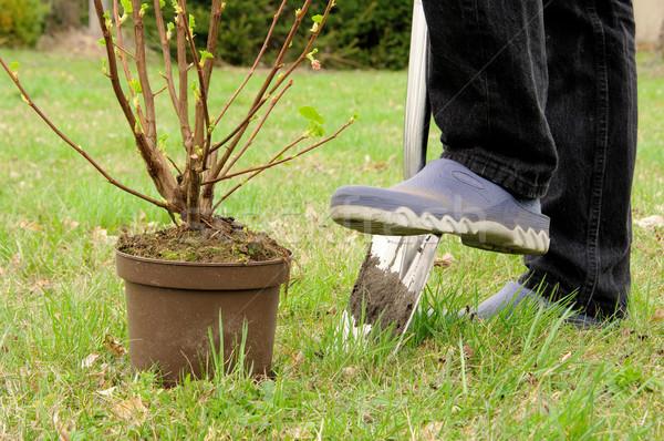 Arbuste printemps maison feuille terre Photo stock © LianeM
