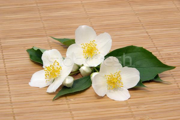14 çiçekler arka plan beyaz model parfüm Stok fotoğraf © LianeM