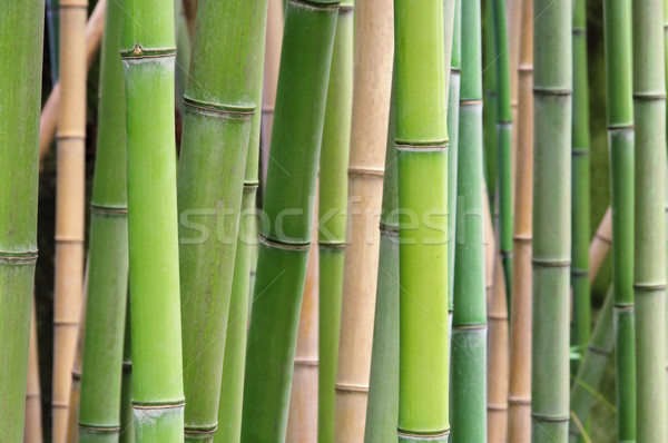 Bambus - bamboo 39 Stock photo © LianeM