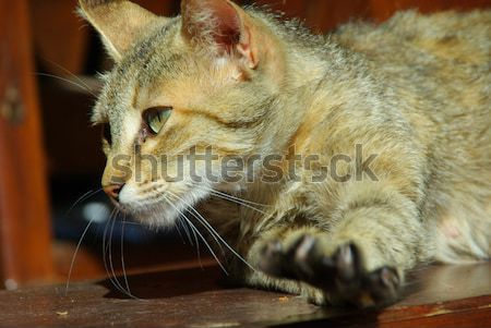 猫 眼 口 皮膚 電源 頭 ストックフォト © LianeM