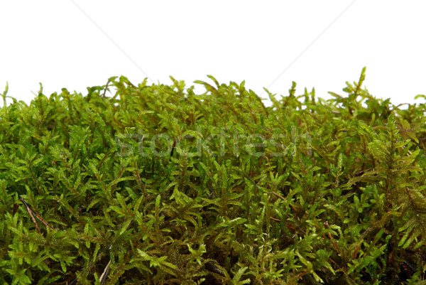 moss 03 Stock photo © LianeM