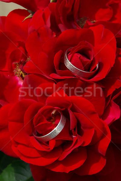 Alyans düğün gül kırmızı altın beyaz Stok fotoğraf © LianeM