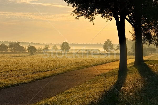 morning fog in a rular area Stock photo © LianeM