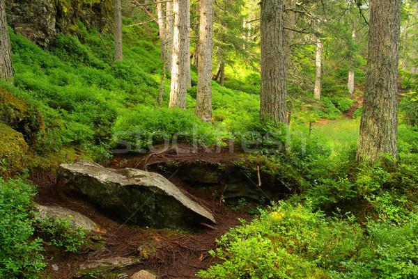 Mocsár fa természet hegy zöld domb Stock fotó © LianeM