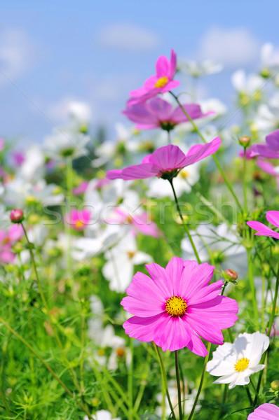 16 niebo kwiat ogród piękna lata Zdjęcia stock © LianeM