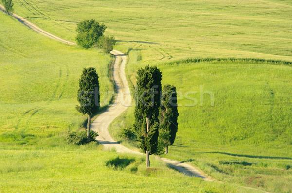 Tuscany hills 20 Stock photo © LianeM