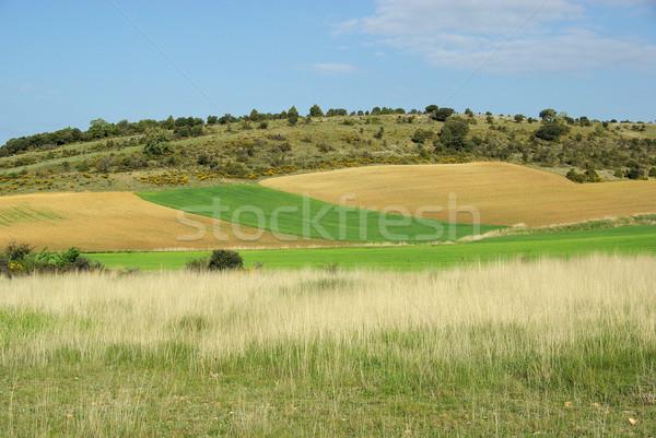 Castile field 05 Stock photo © LianeM