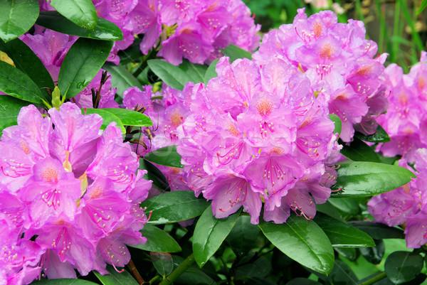 花 自然 背景 緑 葉 工場 ストックフォト © LianeM