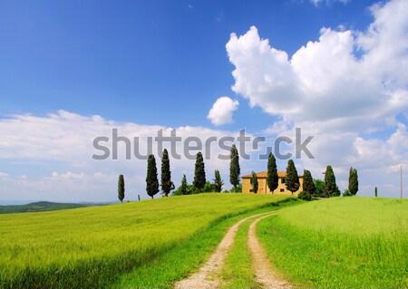 17 casa árbol primavera campo verde Foto stock © LianeM