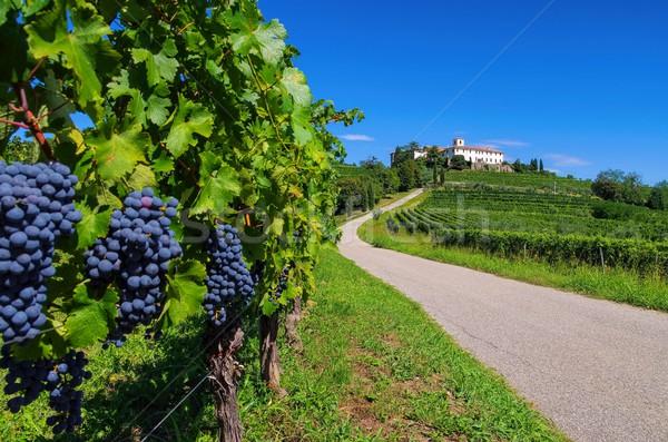 Abdij wijngaard noordelijk Italië weg natuur Stockfoto © LianeM