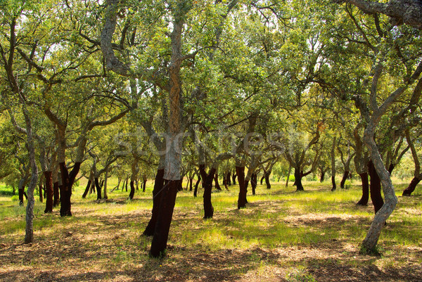cork oak 55 Stock photo © LianeM