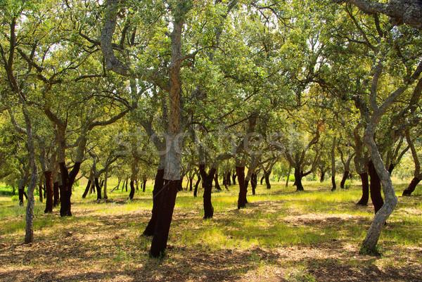 Mantar meşe ahşap orman bitki şube Stok fotoğraf © LianeM