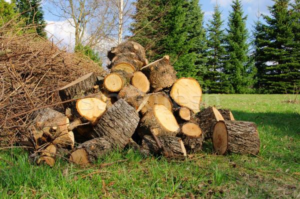 древесины 30 Сток-фото © LianeM
