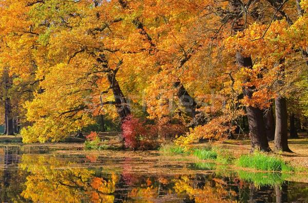 Eik vallen boom blad bomen zomer Stockfoto © LianeM