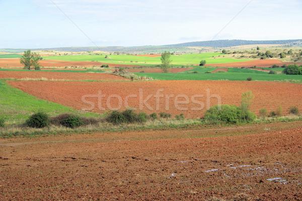 Castile field 14 Stock photo © LianeM