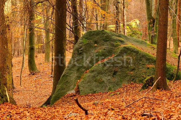 Homokkő kő erdő 10 tájkép levél Stock fotó © LianeM