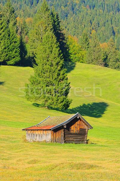 20 bos natuur landschap schoonheid zomer Stockfoto © LianeM