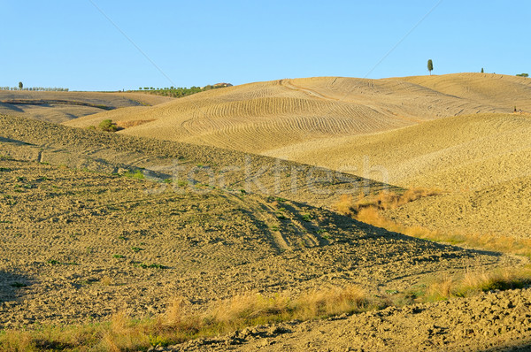 Tuscany land fit for cultivation 02 Stock photo © LianeM