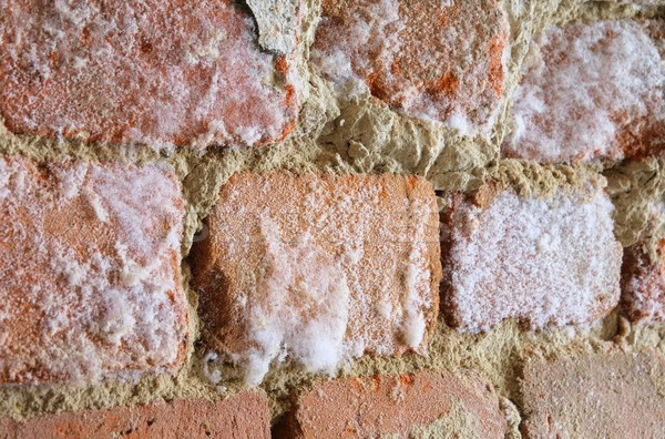 wall with mould fungus 01 Stock photo © LianeM