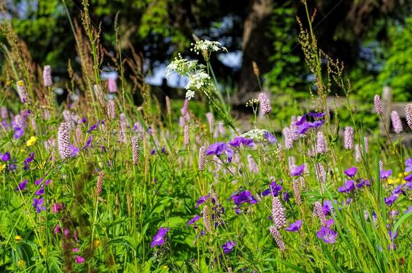 Flor de primavera montanas muchos colores hoja Foto stock © LianeM
