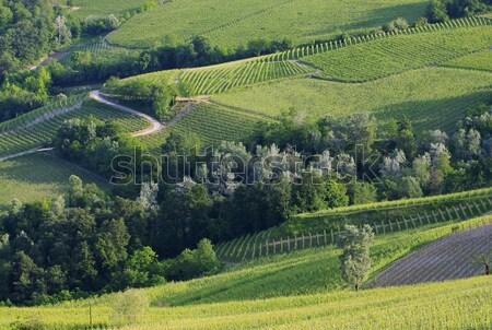 Campo verde viajar planta país agricultura Foto stock © LianeM