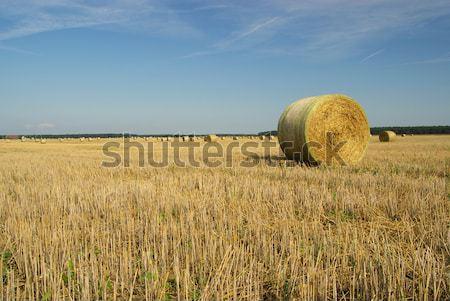 bale of straw 23 Stock photo © LianeM