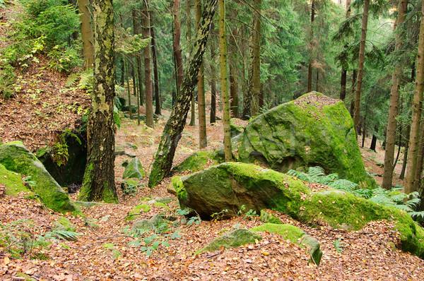 Arenito rocha floresta 25 paisagem pedra Foto stock © LianeM