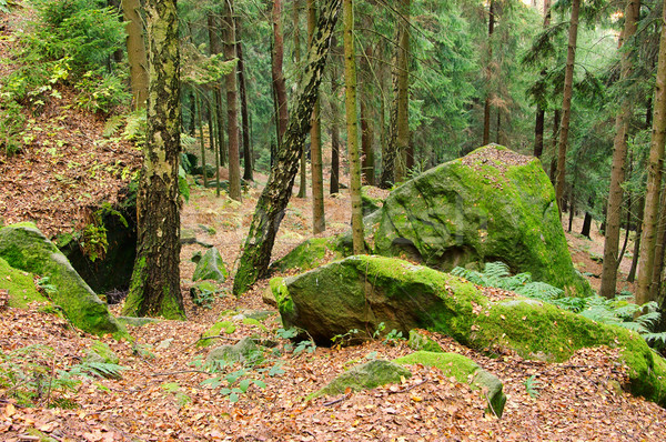 песчаник рок лес На 25 пейзаж каменные Сток-фото © LianeM