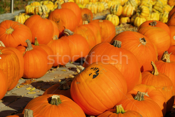 pumkin 31 Stock photo © LianeM