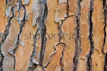 Pine schors boom hout natuur plant Stockfoto © LianeM